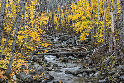 Photograph - Canyon Creek In Autumn II by Loree Johnson