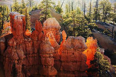 Photograph - Canyon Glow In Bryce Canyon National Park Utah by Vishwanath Bhat