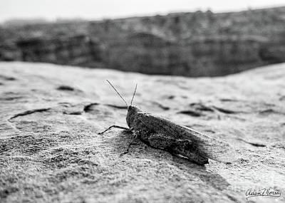 Photograph - Canyon Hopper, Black And White by Adam Morsa