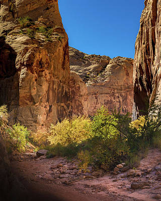 Capitol Reef Photograph - Canyon Light by Joseph Smith