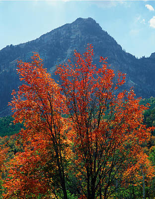 Photograph - 212m46-canyon Maple In Autumn  by Ed  Cooper Photography