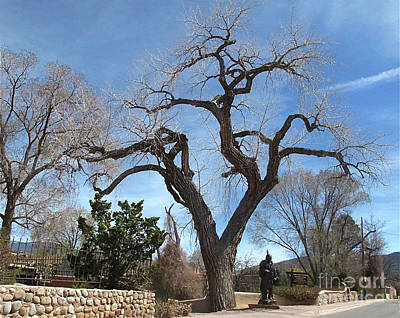 Photograph - Canyon Road Tree Spring by Mary Kobet