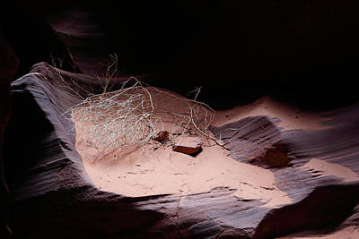 Photograph - Canyon Still Life by Nicholas Blackwell