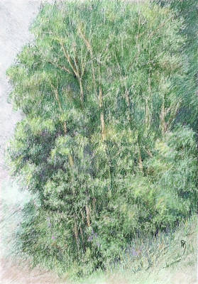Digital Art - Canyon Trees Colorized by David King