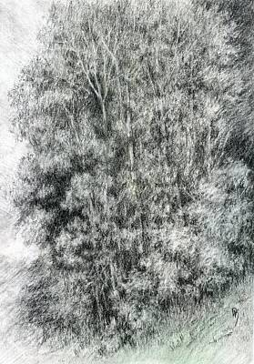 Drawing - Canyon Trees by David King