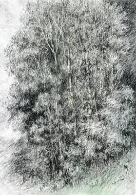 Canyon Trees Art Print