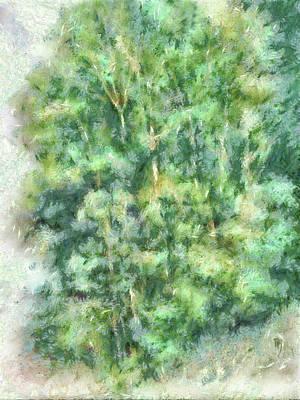 Digital Art - Canyon Trees Dop by David King