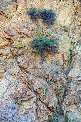Photograph - Canyon Vegetation by James BO Insogna