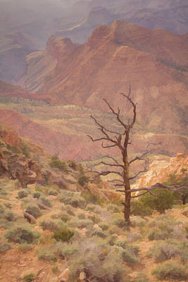 Canyon View And Tree, Desert View Lookout, Grand Canyon, Arizona Art Print