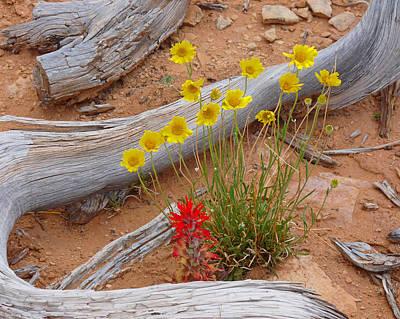 Photograph - Canyonlands Desert Bouquet by Lawrence S Richardson Jr