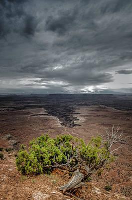 Colorado Plateau Photograph - Canyonlands Juniper by Joseph Smith