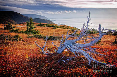 Photograph - Cape Breton Highlands by Scott Kemper
