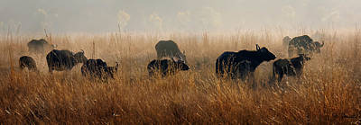 Photograph - Cape Buffalo Herd by Joe Bonita