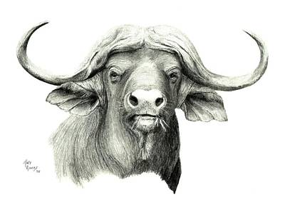 Cape Buffalo Art Print by Mary Rogers