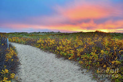 Photograph - Cape Cod Compromise by Third Eye Perspectives Photographic Fine Art