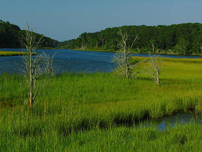 Photograph - Cape Cod Muddy Creek by Juergen Roth