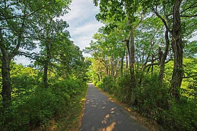 Cape Cod Rail Trail Trees Eastham Ma 2 Art Print