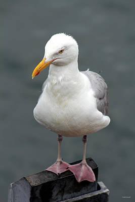 Photograph - Cape Cod Seagull by Linda Sannuti