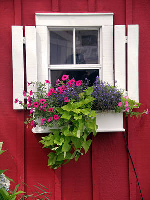 Photograph - Cape Cod Window Box by Jean Hall