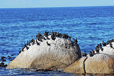 Photograph - Cape Cormorants And Cape Of Good Hope by Harvey Barrison