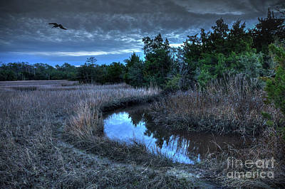 Photograph - Cape Fear Tide Pool by Phil Mancuso