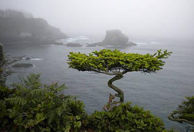 Neah Bay Photograph - Cape Flattery Noble by Wanda Jesfield