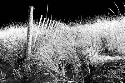 Photograph - Cape May Dark Dune by John Rizzuto