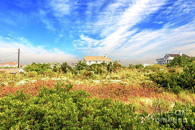 Photograph - Cape May Nature by John Rizzuto