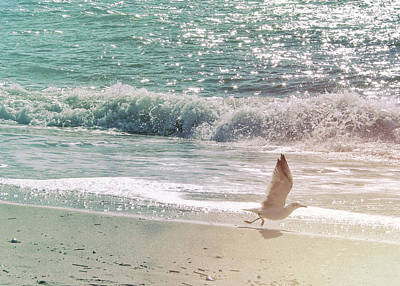 Photograph - Cape May Seagull 6458 by JAMART Photography