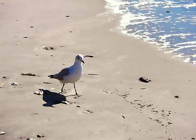 Photograph - Cape May Seagull March by JAMART Photography