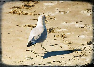 Photograph - Cape May Seagull Pace by JAMART Photography