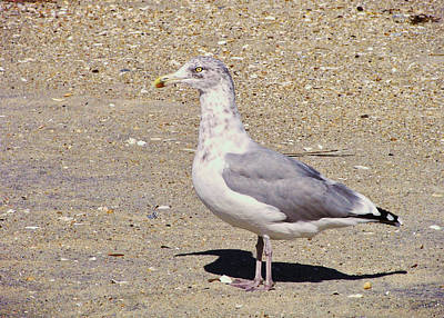 Photograph - Cape May Seagull by JAMART Photography