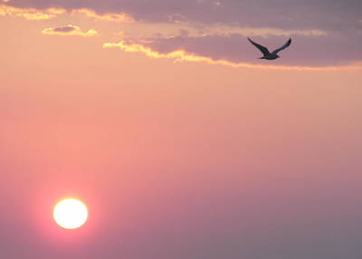 Photograph - Cape May Flying Sunrise   by JAMART Photography