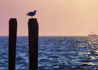 Photograph - Seagull Perch Piling by JAMART Photography