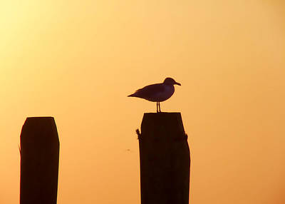 Photograph - Seagull Perch by JAMART Photography