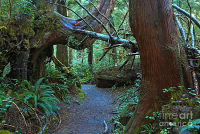 Photograph - Cape Scott Giants by Adam Jewell