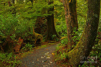 Photograph - Cape Scott Rainforest Trail by Adam Jewell