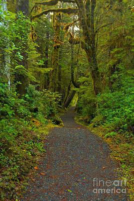 Photograph - Cape Scott Trail by Adam Jewell