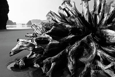 Photograph - Cape Sebastian Roots by Jim Corwin