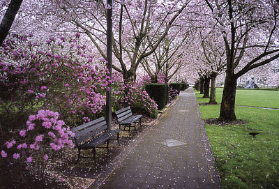 Photograph - Capital Bloom by HW Kateley