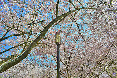 Photograph - Capital City Cherry Blossoms by Third Eye Perspectives Photographic Fine Art