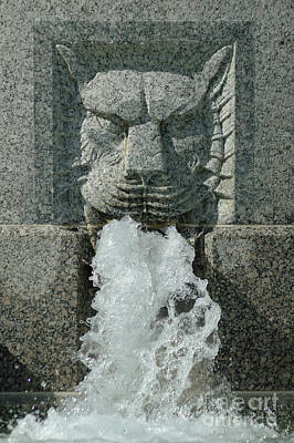 Photograph - Senate Fountain Lion by Larry Johnston