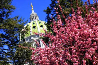 Capitol In Bloom Art Print by Shelley Neff