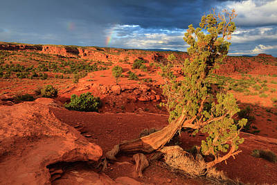 Rose - Capitol Reef National Park by Guoqiang Xue
