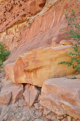 Fruits And Vegetables Still Life - Capitol Rock Fall by Ray Mathis