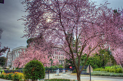 Capitol Tree Art Print by Randy Wehner Photography