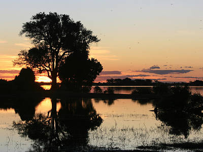 Photograph - Caprivi Sunset by Karen Zuk Rosenblatt