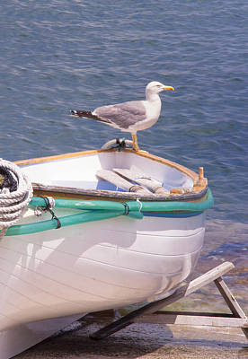 Captain Seagull  Art Print