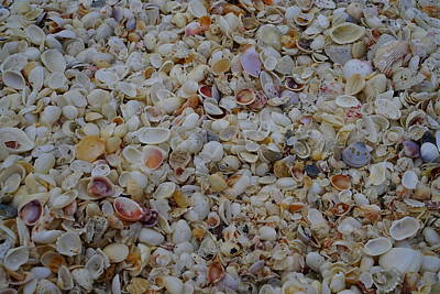 Photograph - Captiva Shell Collection by Laurie Perry