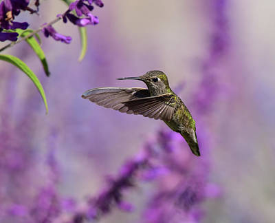 Animals Photos - Captivated IV by Linda Brody